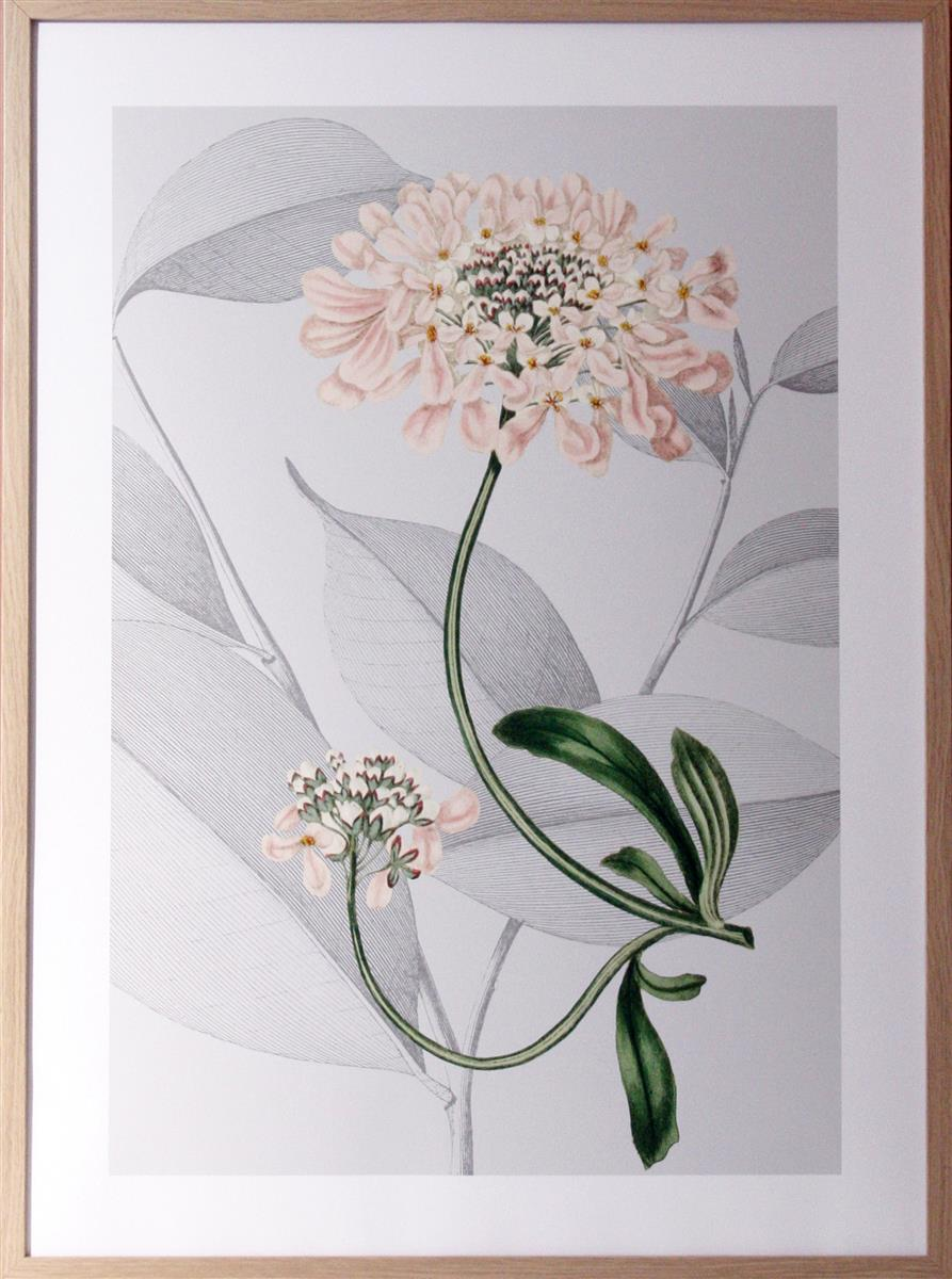 Bilde Botanical Arrangement I 50x70