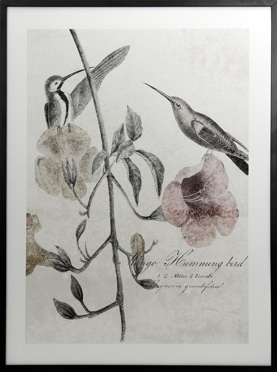 Bilde Soft Hummingbirds 60x80 II
